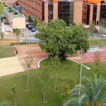 Proyecto Esteve Terrades Parcs i Jardins de Barcelona - Imagen 3 de 3